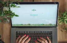 How Google Chrome could help 'ethical' search engine Ecosia plant more trees