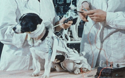 The Curious Lives of the Russian Stray Dogs That Traveled to Space