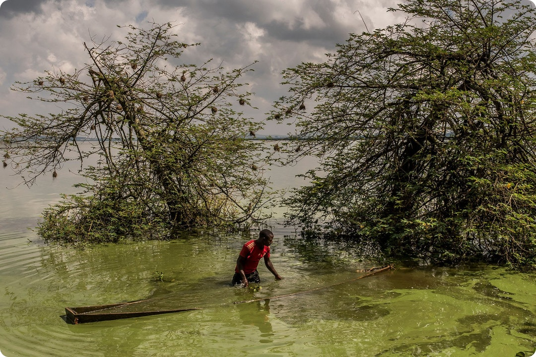 Lake Victoria, Slowly Dying by Frédéric Noy